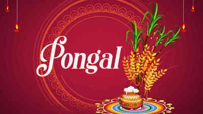 Pongal Info